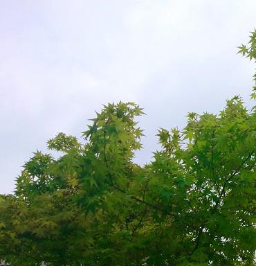 2014-04-18-15-51-59_deco